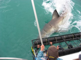 Me, Trying New Experiences! (Shark Cage Diving in South Africa)